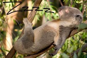 koalatired